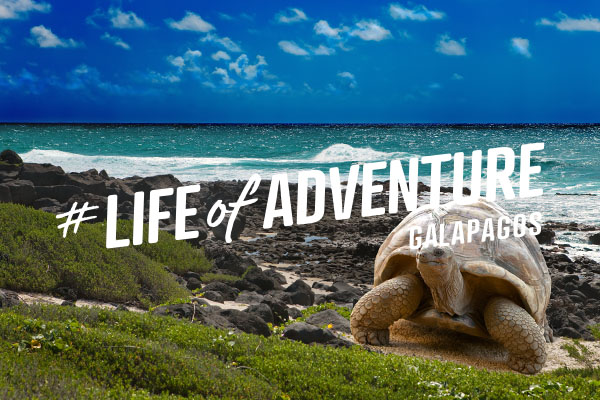 Galapagos Islands, email campaign